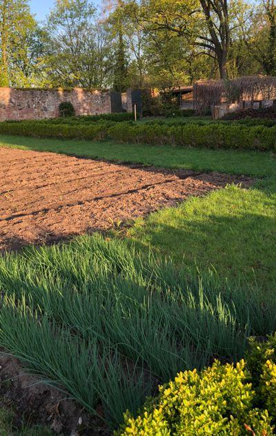 Hier wachsen bald Blumen für den Kirchenschmuck, Zwiebeln, Rote Beete und Kartoffeln für die Küche sowie die Futterrüben für unsere Klosterhasen. Der Schnittlauch im Vordergrund kann schon geerntet werden.